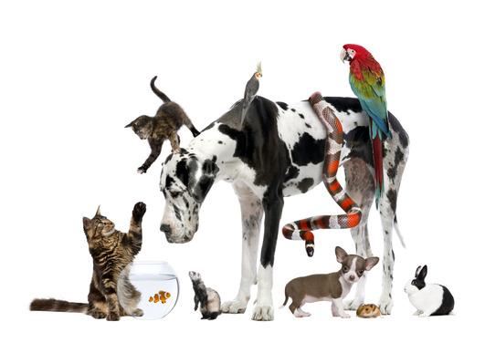 Which Haven Caravan Parks allow pets?